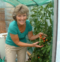Neighbour growing tomatoes in greenhouse