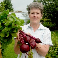 Planting beetroot for great harvests