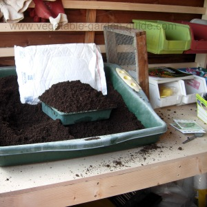starting vegetable seeds - small tray filled with compost