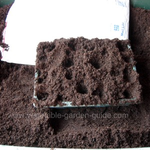 sowing seeds - proding compost with fingers