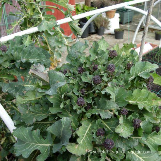 Vegetable Garden Inspiration Raised Beds
