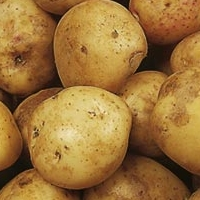 cara potato seed