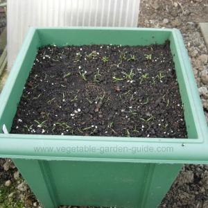Vegetable Garden Container Ideas