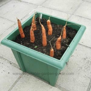 Balcony Gardening Vegetables Blog Railing Planters Hold