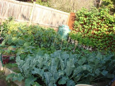 Our Successful Vegetable Garden