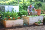 Standard Raised Beds GDN-472 Harrod Hort
