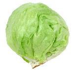 Lettuce variety: Crisphead 