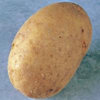 marfona potato seed