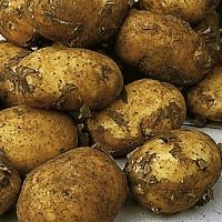 Maris Peer potato seed