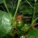 Gardening pests