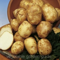 Pentland Javelin potato seed