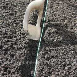 Making groove for sowing seed - close up