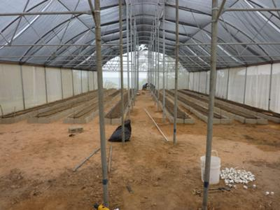 Our Mesh Greenhouse