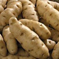 Anya Potato Seed