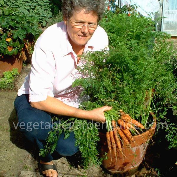 8 Stunning Container Gardening Ideas: Container Gardening Ideas
