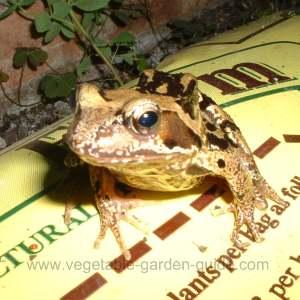 Freddie Frog In Greenhouse Vegetable Beds