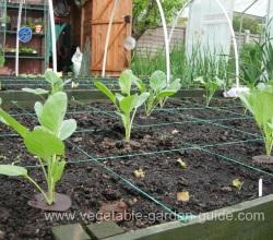 Vegetable Garden Questions