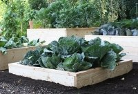 Harrod Horticultural vegetable garden shopping