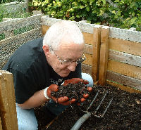 Author holding rich compost ready to put on brussel sprout bed