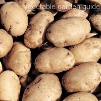 maris bard potato seed