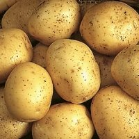 Nadine potato seed
