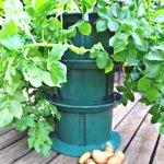 Dobies Patio Potato Planter