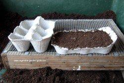 How to grow lettuce - egg box
