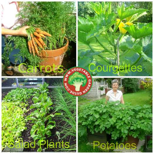 Vegetable gardening guide