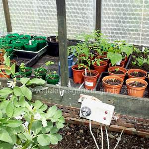 vegetable seeds in propagator