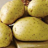 vivaldi potato seed